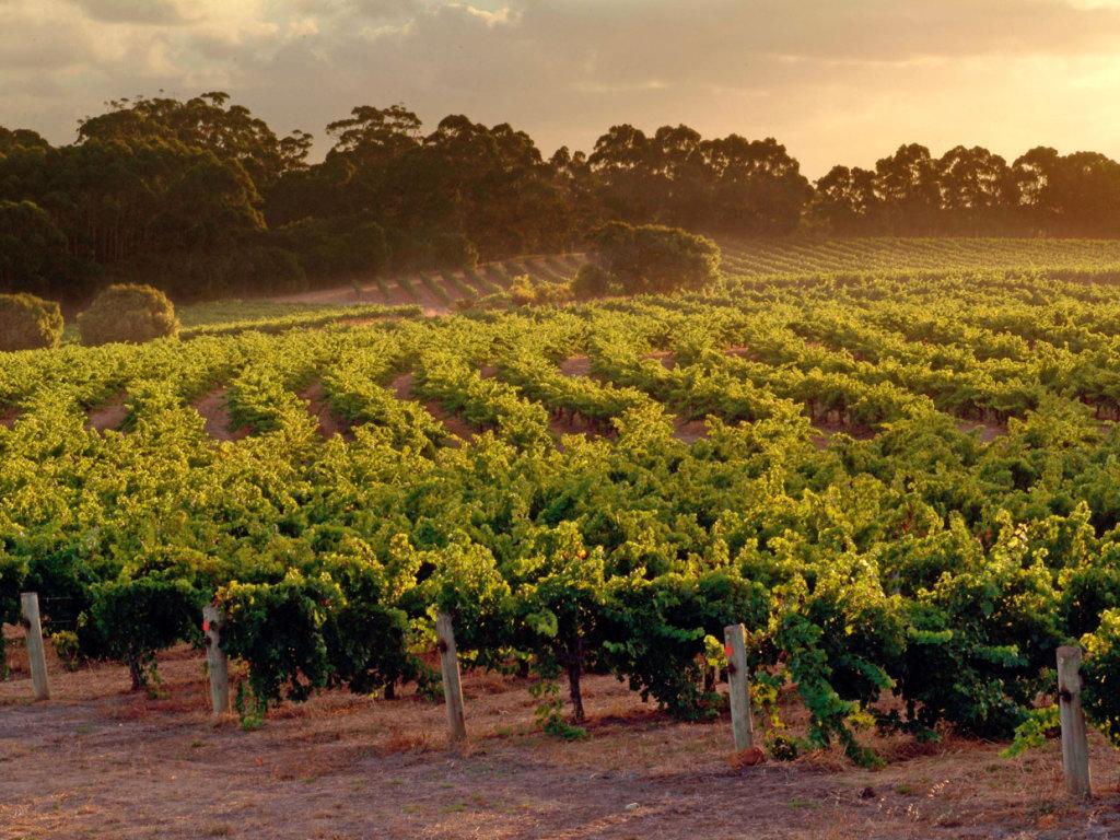 vigne avantages gfv