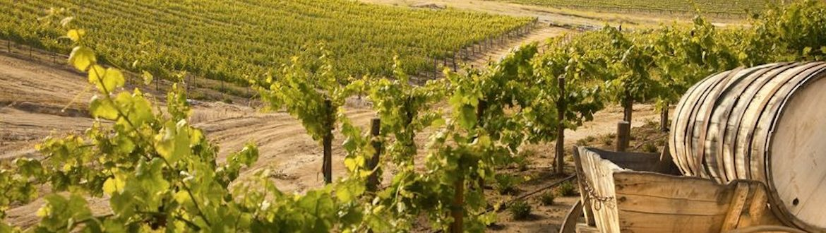 Pleasing investment in the vineyard